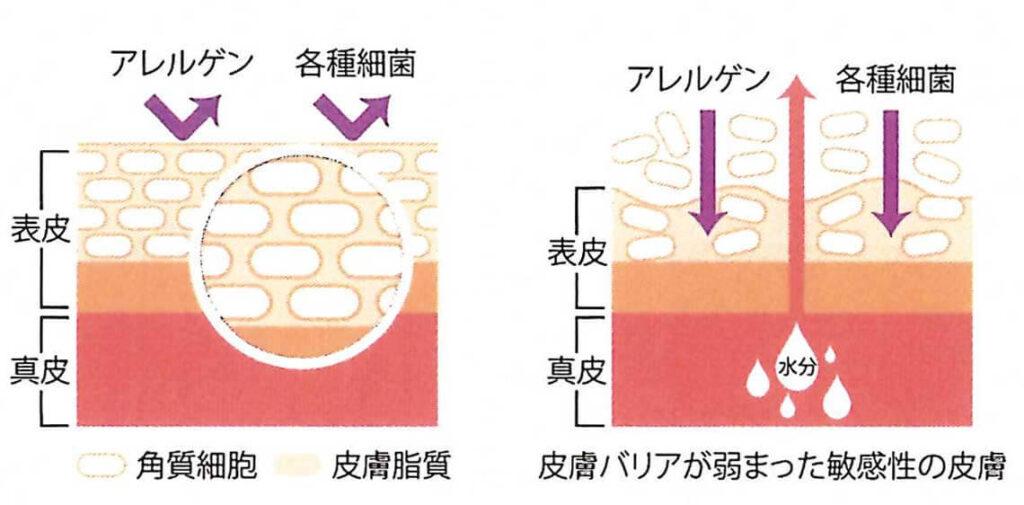 幹細胞美容液クレアボーテ ヒト脂肪幹細胞培養液